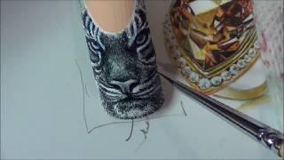 getlinkyoutube.com-тигр