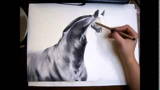 getlinkyoutube.com-Friesian Horse Drawing - Time lapse