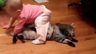 getlinkyoutube.com-Kumpulan video lucu bayi bermain dengan kucing - paling lucu banget bikin ketawa