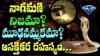 SHOCKING!! The Origin of NAGAMANI in Cobras || Rectv Mystery