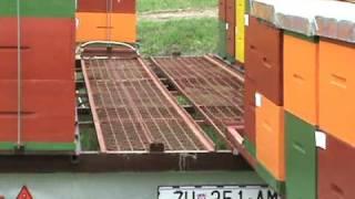 getlinkyoutube.com-honey bees trailer