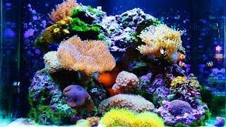 getlinkyoutube.com-Nuvo 30 Gallon Amazing Aquarium HD