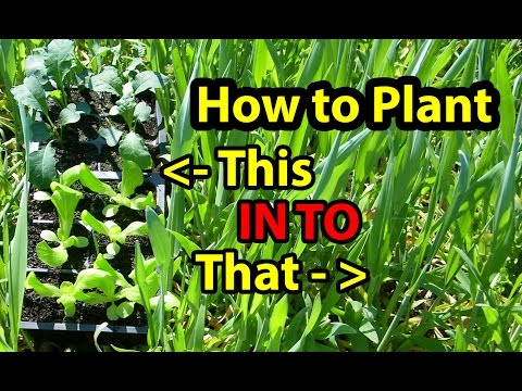 True NO Till Gardening - Growing ( Building ) Soil for Organic Vegetables for beginners 101. Part1