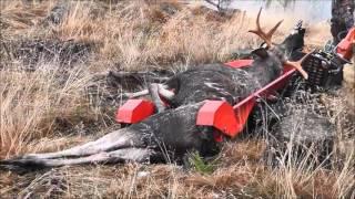 getlinkyoutube.com-Nye Jernhesten  Flex kjører elg  hos Løvenskiold Fossum i Norge