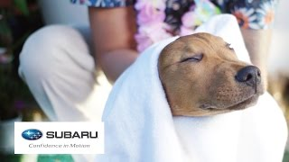getlinkyoutube.com-Dogs Visit A Spa For The First Time // Presented By BuzzFeed & Subaru