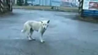 getlinkyoutube.com-FUNNY DANCING DOG TECHNO VERSION