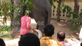 getlinkyoutube.com-Elephant attack Varkala Temple BY Orange channel Varkala