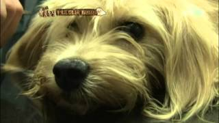 getlinkyoutube.com-유기견의 새가족 찾아주기!  @TV 동물농장 20120819