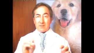 Allergie e tumori nel cane e nel gatto