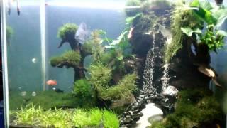 getlinkyoutube.com-Aquascape air terjun