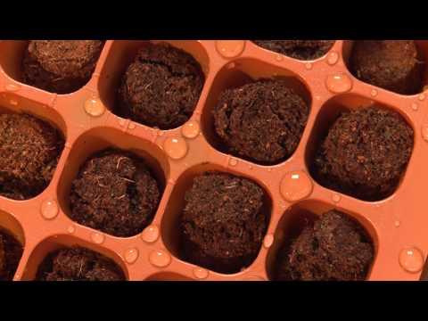 Quick Start Gardening Guide: Seed Starting Essentials