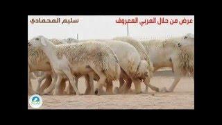 getlinkyoutube.com-عرض من حلال وبعض من صور جلب مزاد المربي المعروف / سليم المحمادي - أبو فارس