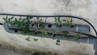 getlinkyoutube.com-Καλλιεργηστε λαχανικα στον σωληνα