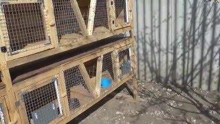 getlinkyoutube.com-Уличные клетки для кроликов.