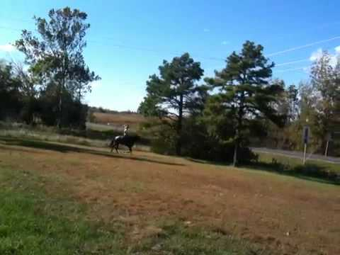 Aqha blue roan mare for sale