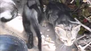 Cute Playful Funny Little Kittens on Canary Islands