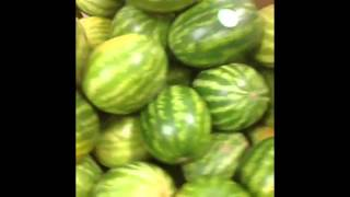 getlinkyoutube.com-Best Watermelon Vines Compilation