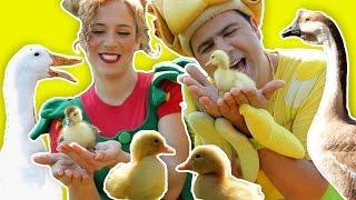 getlinkyoutube.com-فوزي موزي وتوتي – أغنية البطة البطبوطة – The Duck Song