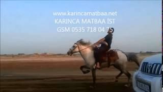 getlinkyoutube.com-KARS ve ARDAHAN İLİ ' NDE YORGA AT