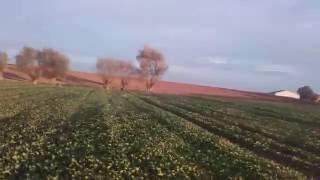 Rzepak ozimy - lustracja plantacji/Kula RRK
