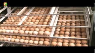 getlinkyoutube.com-Smart Farm: kienyeji chicken hatchery business