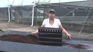 getlinkyoutube.com-Proceso de Pre - Germinación de la Semilla de Papaya