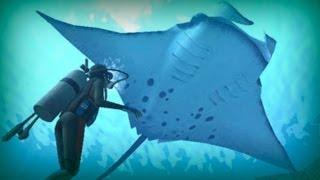 getlinkyoutube.com-Manta ray, a giant of the ocean