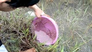 getlinkyoutube.com-ช้อนปลากัดป่าภาคใต้สไตล์กากๆ2 (Catch Betta imbelis)