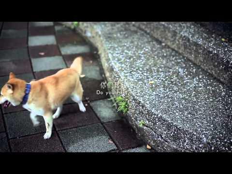 《流浪心事》由明星愛犬訓練學校教練指導狗明星領銜主演的微電影 (導演 林孝謙) - YouTube