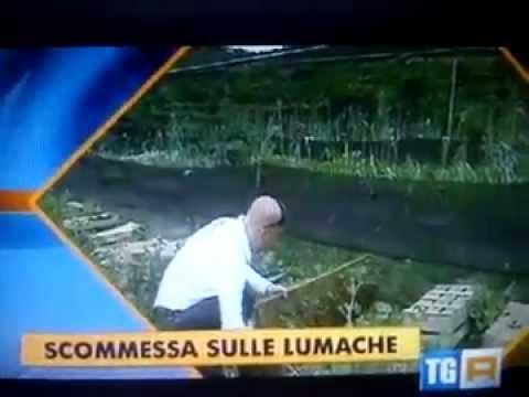RAI 3 IL SETTIMANALE  Miceli's Snail di Ciro Miceli, Allevamento lumache - 28 Marzo 2014
