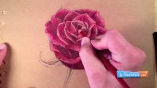 getlinkyoutube.com-How to Draw a Rose with Colored Pencils