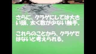 getlinkyoutube.com-【ポケモンの怖い話】第11章 プルリルの正体