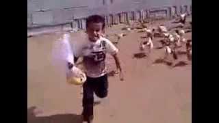 هجوم الدجاج على طفل ، خرية ديال الضحك ههه