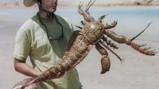 getlinkyoutube.com-Bizarre Sea Scorpion