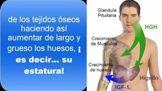 getlinkyoutube.com-Hormona del Crecimiento | Descubre Como Puedes seguir Creciendo sin Importar tu Edad  IGF 1