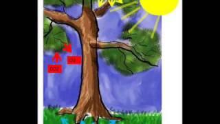 getlinkyoutube.com-fotosintesis