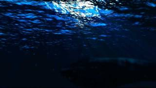 getlinkyoutube.com-Underwater After Effects Psunami HD