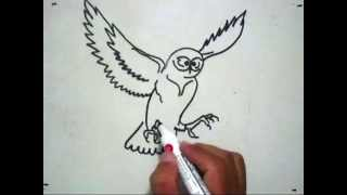 getlinkyoutube.com-How to Draw An Owl (Cara Menggambar Burung Hantu)