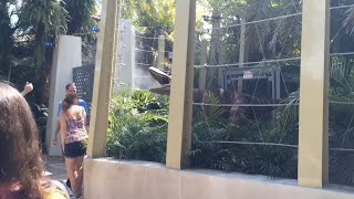 getlinkyoutube.com-Jurassic World Raptor Encounter at Islands of Adventure
