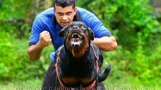 saajan saji cyriac dog training school at  pala kerala 09961310970 width=