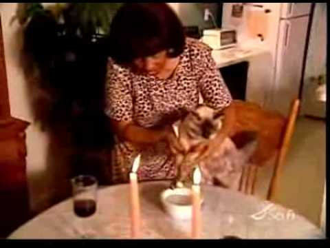 WTF. Crazy woman teaches her cat to eat with a fork  and chopsticks!
