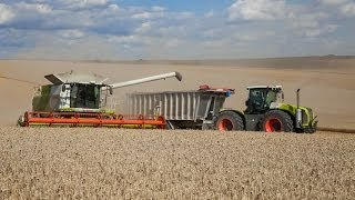 CLAAS LEXION 770 / CLAAS XERION 5000 & XERION 3800 - big harvest 100% Claas