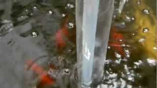 getlinkyoutube.com-Homemade Hydroponics and Diy Water Pumps