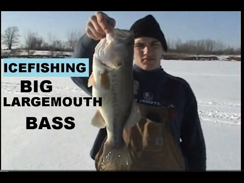 ICEFISHING BIG  LARGEMOUTH BASS