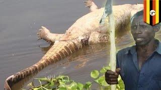 getlinkyoutube.com-الزوج ينتقم من التمساح الذي أكل زوجته الحامل بالشهر الثامن