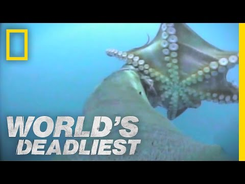 World's Deadliest - Sea Lion vs. Octopus