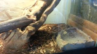 Salamander, dragons, anoles, iguana, gecko, skinks