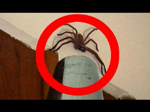 Big Spider Attacks Daddy Vacuum Shooter
