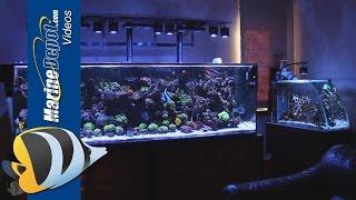 getlinkyoutube.com-Marine Depot Featured Tank: Matt's Fully Loaded 300 Gallon Mixed Reef