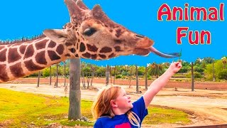 getlinkyoutube.com-ASSISSTANT Wild Animal Safari Adventure Feeding Giraffes Animals Video